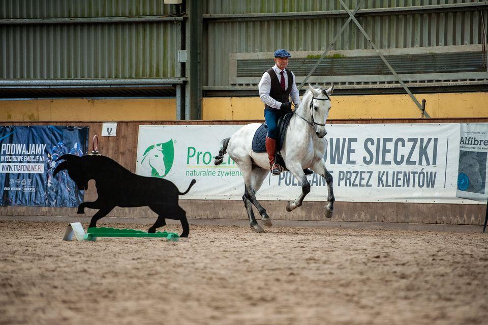 Zawody Working Equitation w Akademii Sztuki Jeździeckiej